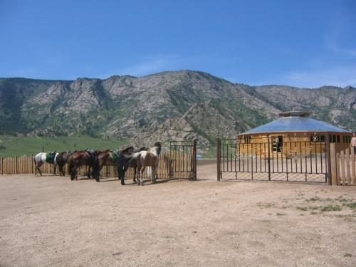 Pferde vor dem Saloon