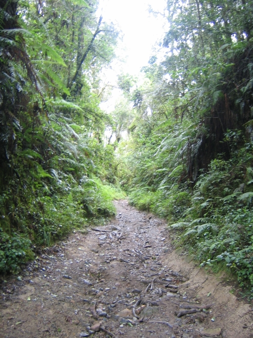 Der Wanderweg zum Vulkankrater bei Mbeya in Tanzania