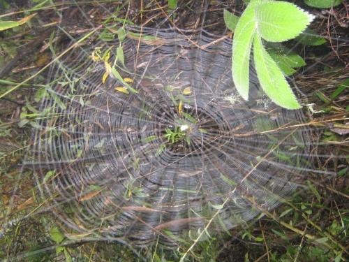 Ein Spinnennetz im Regenwald bei Mbeya