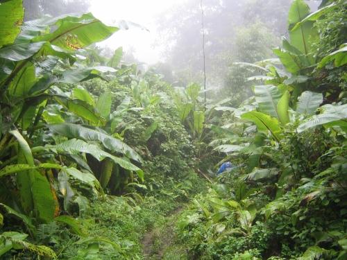 Regenwald in den Southern Highlands von Tanzania