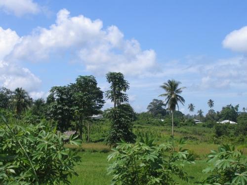 Irgendwo auf Zanzibar Island