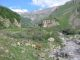 Natur pur auf meiner Wanderung Richtung Kazbek