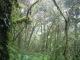 Der nepalische Regenwald