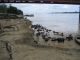 Auch kuehe wollen im Ganges baden