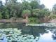 Der Suesswassersee bei den Flecker Botanic Gardens