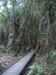 Regenwald Walkway ausserhalb von Cairns