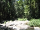 Regenwald in Kuranda