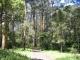 Der Regenwald der Dandenongs