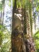 Eine weitere Skulptur im William Rickett Sanctuary