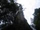 Ein hoher Baum im Maits Rest Regenwald