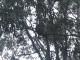 Ein Koala sitzt im Baum