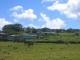 Pferde auf einer Wiese auf Rapa Nui (Osterinsel)