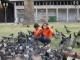 Taubenfuetternde Kinder am Plaza de Mayo