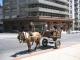 Eine Pferdekutsche zur Muellentsorgung