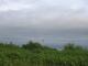 Einer von vielen Voegeln im Pantanal
