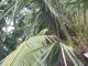 Ein gruener Papagei im Baum