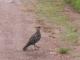 Ein Geier wartet neben unserer Unterkunft