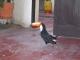 Der Tucan Sam in der Residencial Boliviar