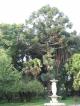 Ein Baum im Garten des Palacio