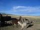 Ein Lama und ein Alpaka bei der besuchten Familie