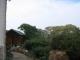 Der Garten des Backpackers Ritz of Johannesburg im Stadtteil Dunkeld
