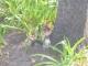 Ein Streifenhoernchen im Companys Garden