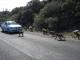 Paviane im Naturschutzgebiet am Kap